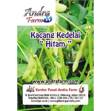 Kacang Kedelai Hitam Menyemai Bijinya Benih Andra Farm